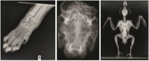 Agfa_x-ray_images