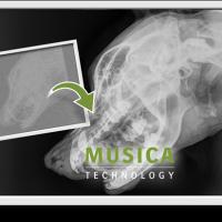 MUSICA_VET_GREEN